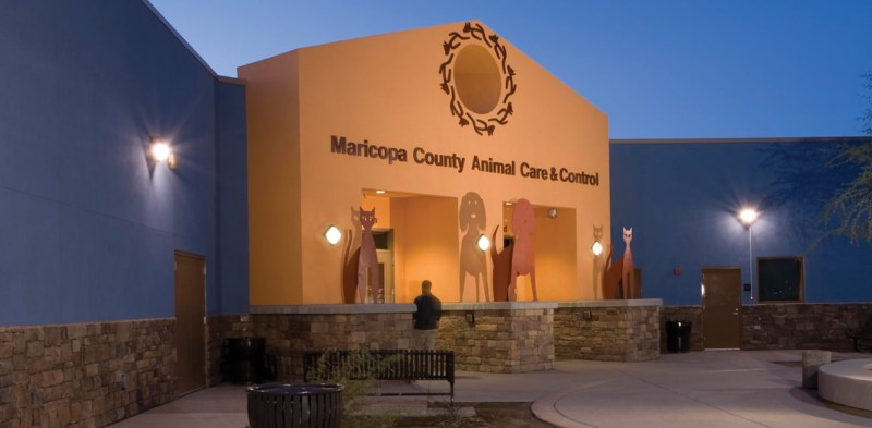 Large Of Maricopa Animal Care And Control