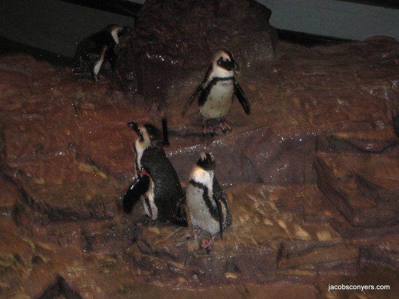 I like penguins a lot.