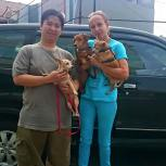 Dante and Nelly just got adopted! Thank you to William who adopted them. We are going to miss them terribly, but we know they are going to a good home where they have free run of the house and will go for daily walks in a very nice neighborhood. We are sooo happy and will definitely visit soon!