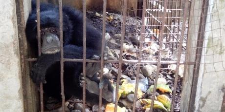 16867_Wildlife_Conservation_Veterinarian__Zoo_Check_-_Taman_Remaja_Kota_Bengkulu_1_460x230