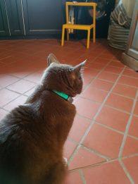 JamJarGill: CAT PARENTING: KADDZ product review (pt 3)