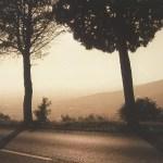 TreesCortona