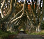 The beach, 300 year old beech trees and a giveaway!