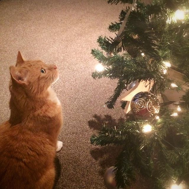 Close inspection of the Christmas tree!