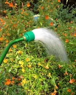 water_wand_soft_rain_nozzle