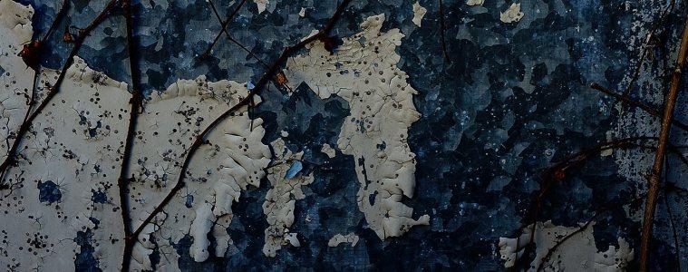Textures of Tokyo: old overgrown door in Akabane