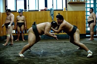 ALF_8662_sumo-small