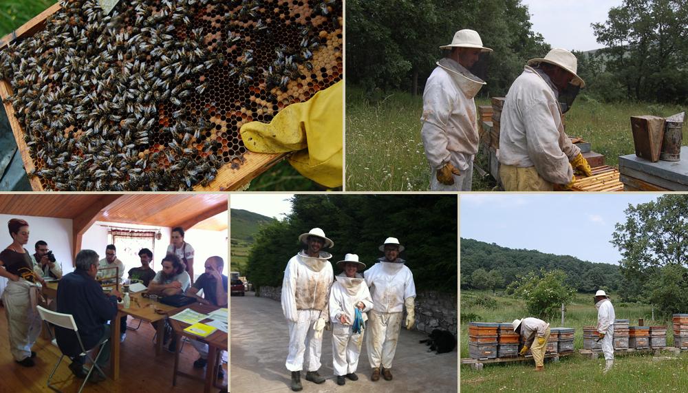 curso-de-apicultura