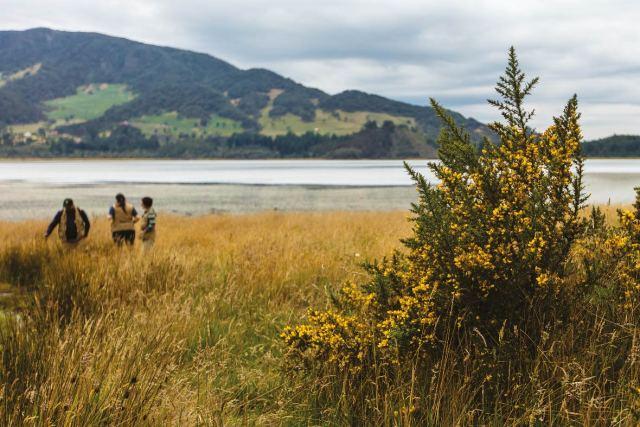 Una de las especies invasoras más dañinas para el ecosistema altoandino es el retamo espinoso. Los investigadores trabajan por conocer la especie y la resistencia de sus semillas y buscan métodos para eliminarla.