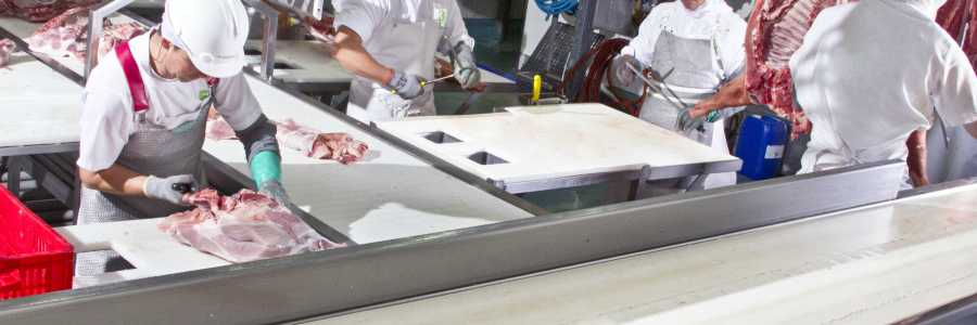 Objetivo: elevar la calidad de la carne de cerdo
