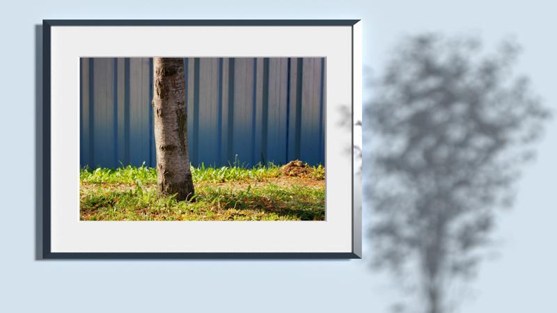 Steel sheet piling wall birch tree grass frame