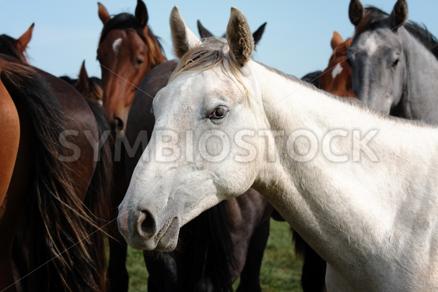 Close-up herd of horses - Jan Brons Stock Images