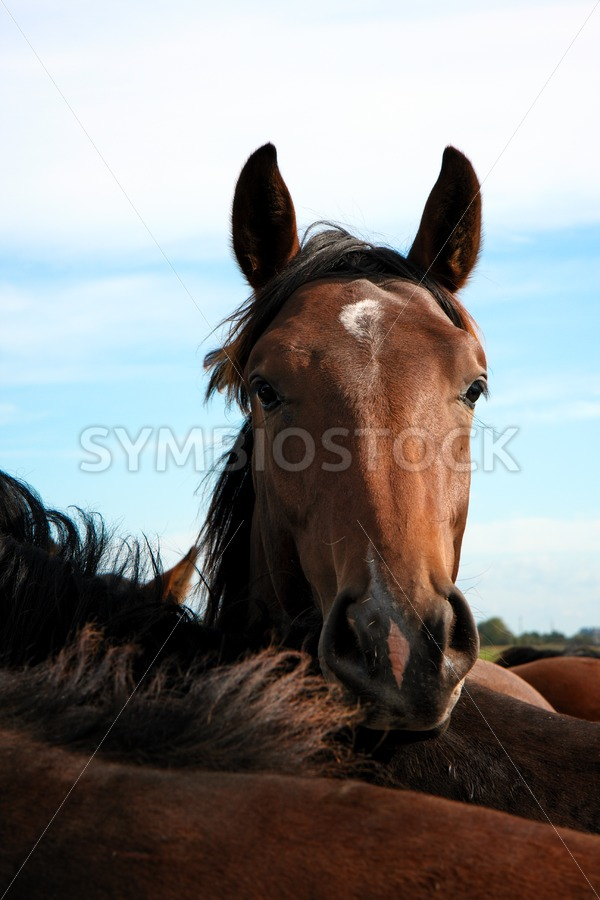 Horses - Jan Brons Stock Images