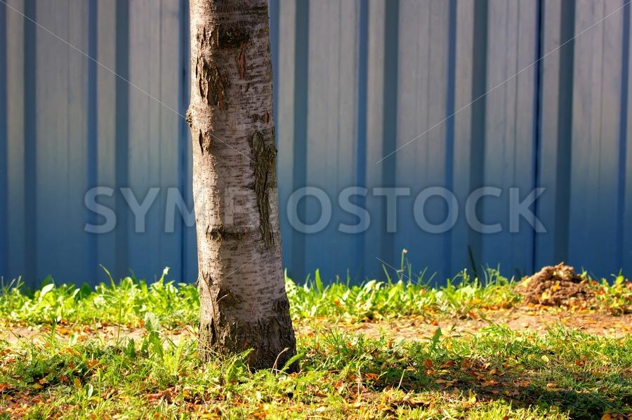 Steel sheet piling wall birch tree grass - Jan Brons Stock Images