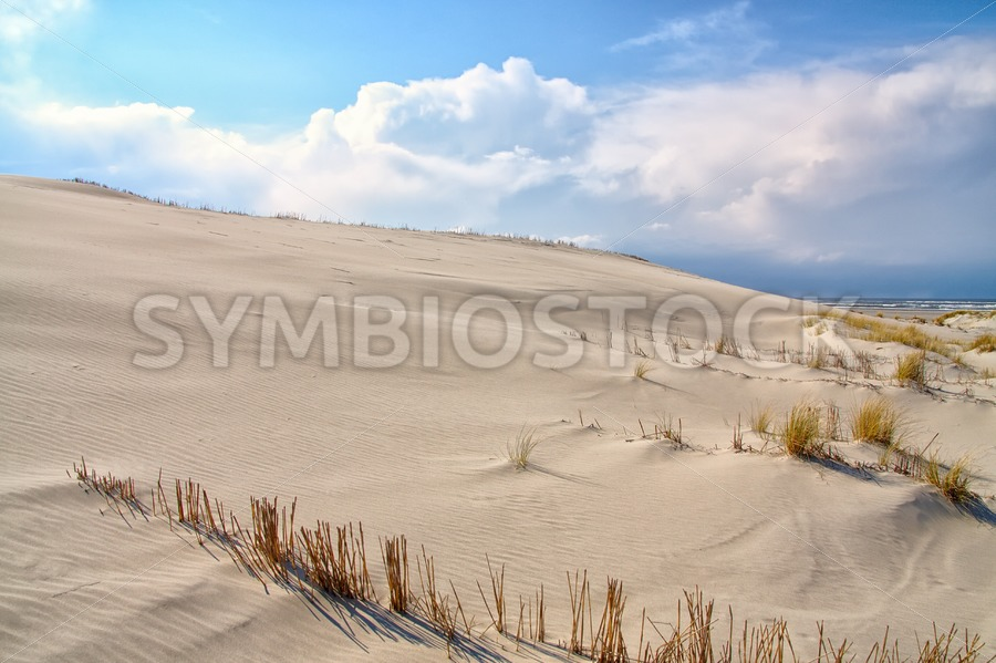 Coastal dunes - Jan Brons Stock Images