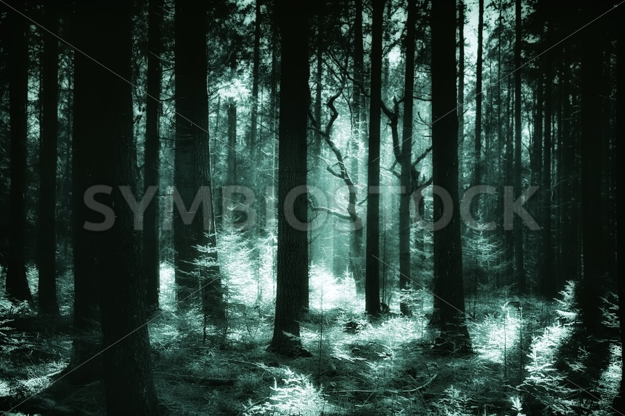 Green glowing pine forest - Jan Brons Stock Images