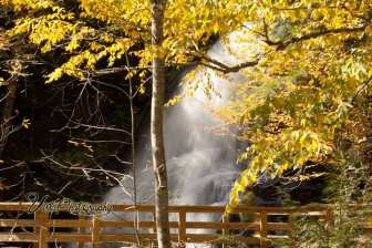 Striking yellow fall foliage at Moss Glen Falls