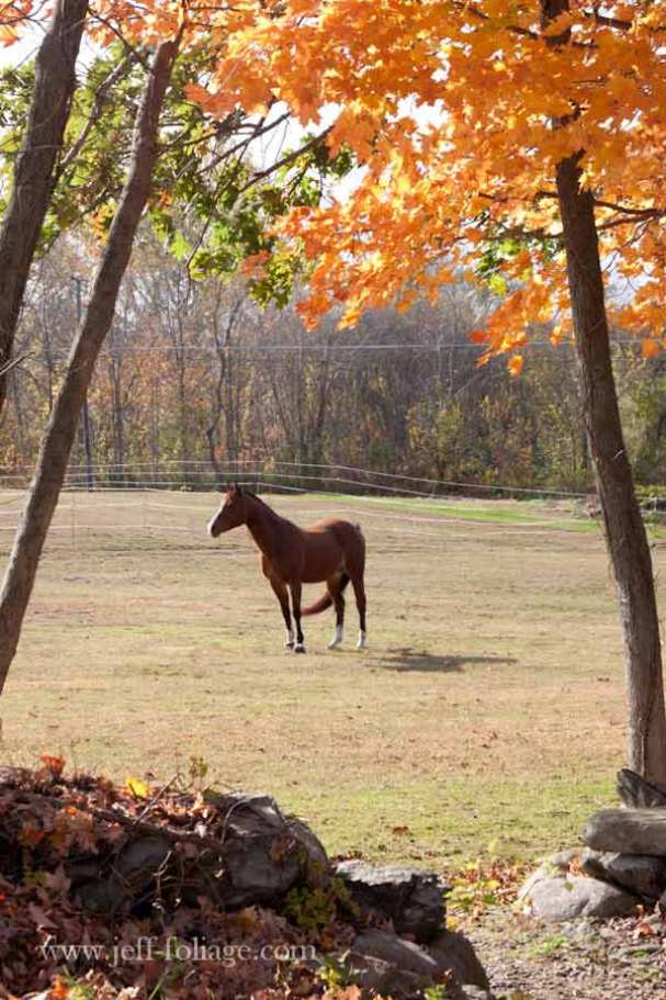 horse standing in a Connecticut field with fall colors framing the shot
