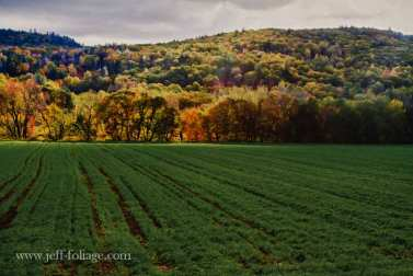 Folger-Fall-color-hills