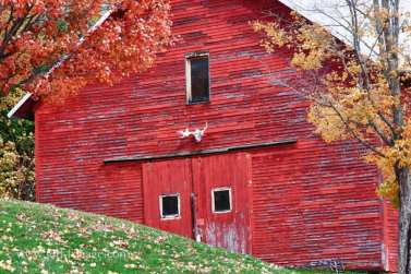 Folger-barn-maine-fall-foliage