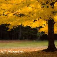 My top tips to improve your fall foliage pictures