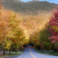 Fall Foliage Forecast 2016