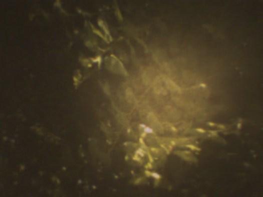 Trees_01