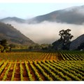 One of the things that makes Santa Barbara wine country so unique is it's east/west mountain range.