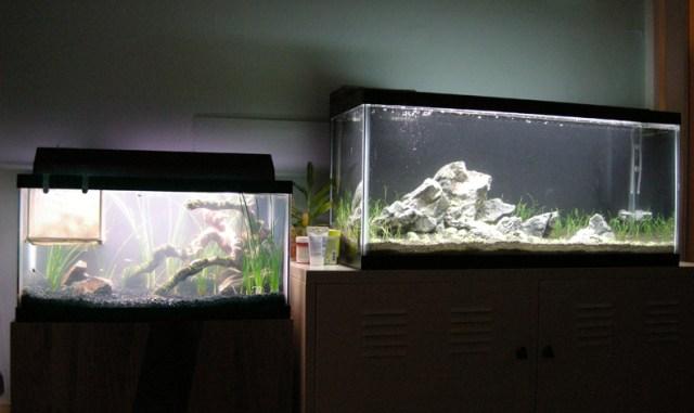 exosket's 30 gallon? | AquaScaping World Forum