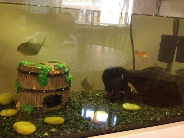 new-fish-tank