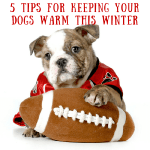 How Keep Your Dogs Warm This Winter