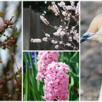 Oklahoma Color Project: Signs of Spring