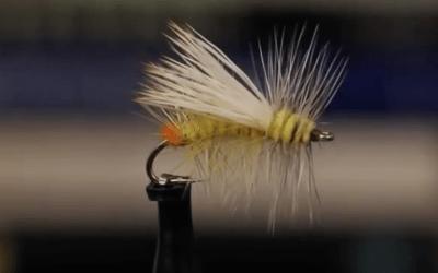 Yellow Sally Stimulator – Fly Pattern of the Week