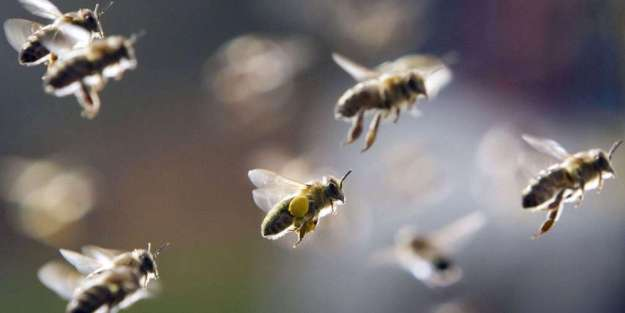 abeilles_2