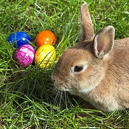 Easterbunny_1