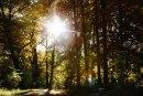 Teens-Tree-Trunks-010612