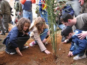Planting a date palm in Hebron with the Kumah organization, 2006
