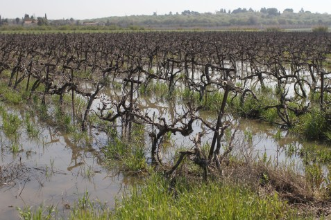 View of the water covered fields in northern Israel, after heavy rain fall.