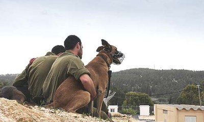 Oketz is the IDF elite canine unit, trained to operate in every combat contingency.
