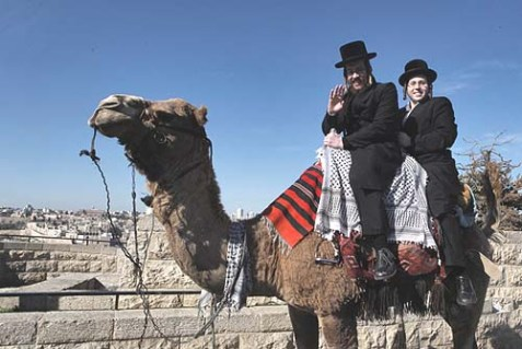 Haredim Can Be Trained to Do Anything