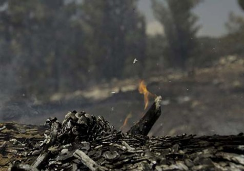 Several fires started in the Jerusalem forests this summer, but only a few were started over nationalistic sentiments.