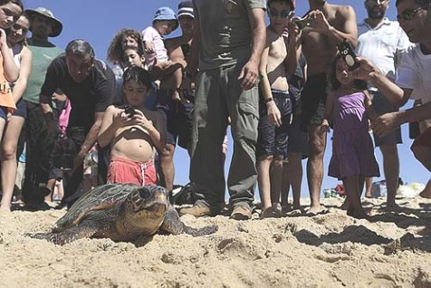 Turtle Goes Home with Wild Rumba