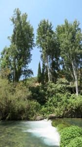 Littman-122812-Tall-Trees