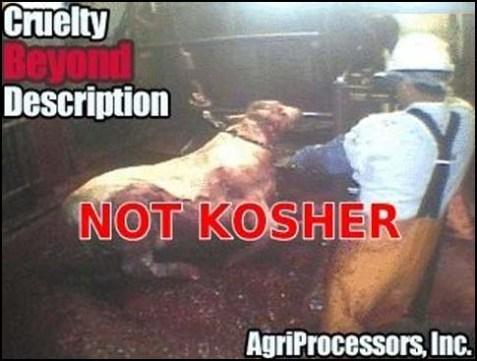 kosher-agriprocessors