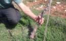 Israeli vineyard.