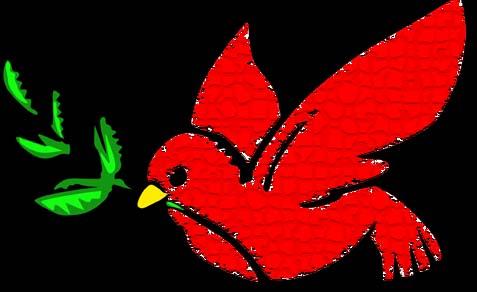 No Peace Dove