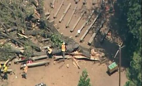 One adult was killed and 20 others were injured when a tree smashed through a dining room roof at a Jewish summer camp ion California