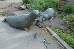 sea lions park