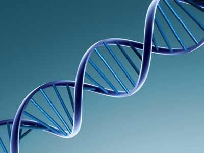Bodenheim-101113-DNA