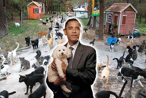 obama cats and dog